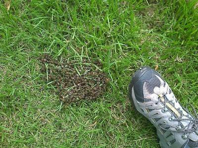 Stepping on a Hornet's Nest