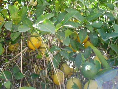 A Fruitful Time