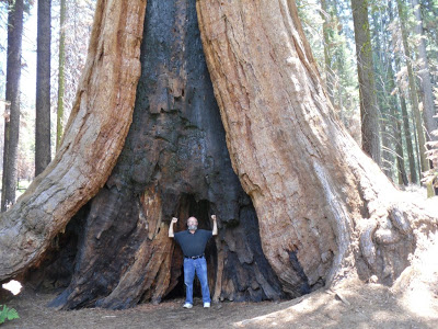 Parable of Sequoia National Park