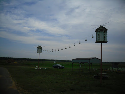 Purple Martins, Red Strawberries and Hot Water